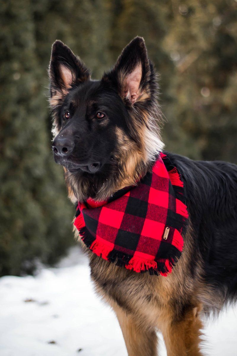 Red Buffalo Plaid TieOn Pet Bandana Pet bandana, Pets