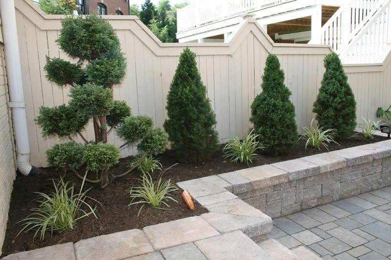 Detail dwarf alberta spruce bonsai juniper and for Best dwarf trees for front yard