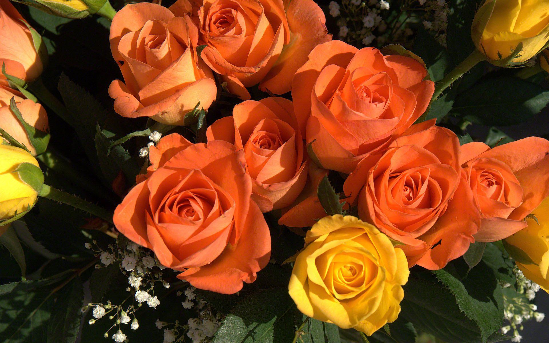 rose bouquet Wonderful flowers