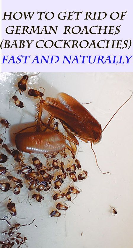 10 Natural Ways To Get Rid Of German Roaches (Baby Cockroaches) Fast | Pest Control roaches