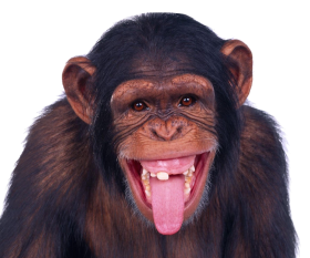 Big Explosion With Fire And Smoke Png Free Png Images Png Free Png Images Monkeys Funny Laughing Animals Funny Animals