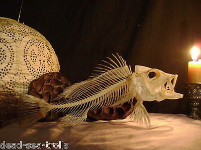 ANCIENT NECROMANCY real fish skeleton bones skull