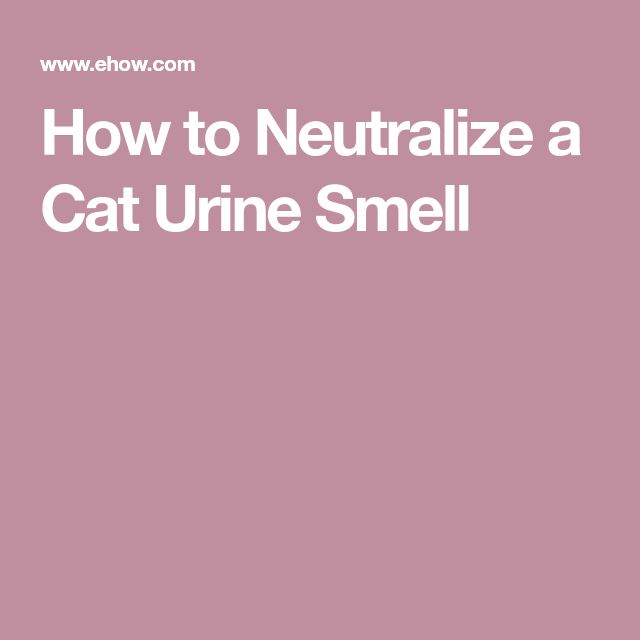 how to neutralize cat urine smell