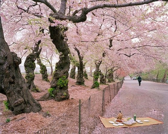 Green On Tree Bark Pink On Branches Pink Trees Photo Projects Beautiful Places