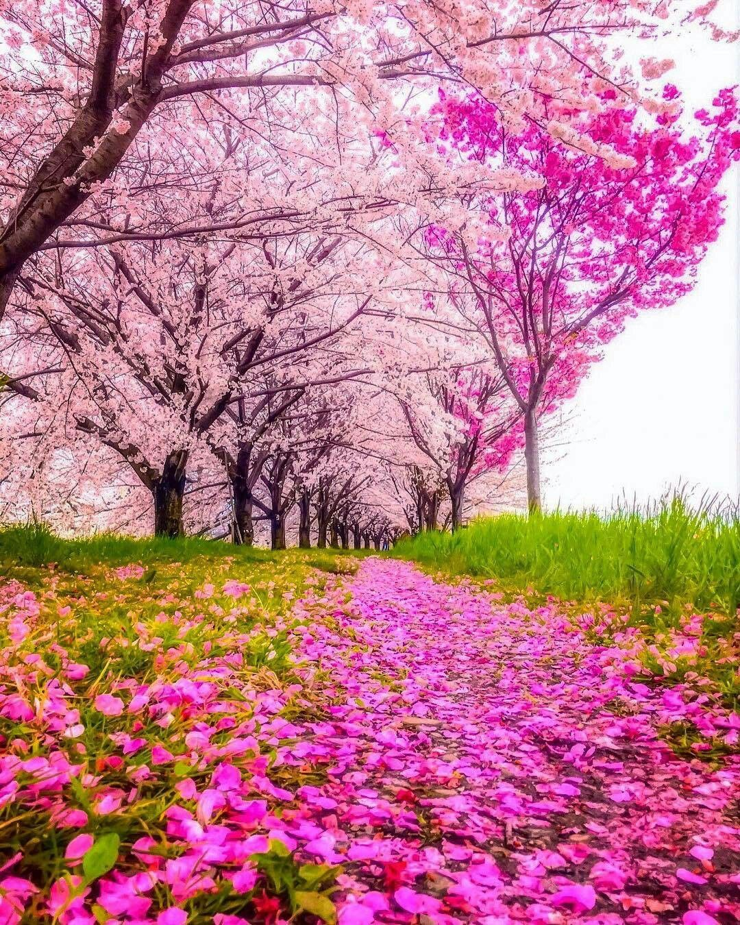 Pin By Yul Li On Cảnh đẹp Nhan Gian Beautiful Landscapes Scenic Photos Landscape Photography