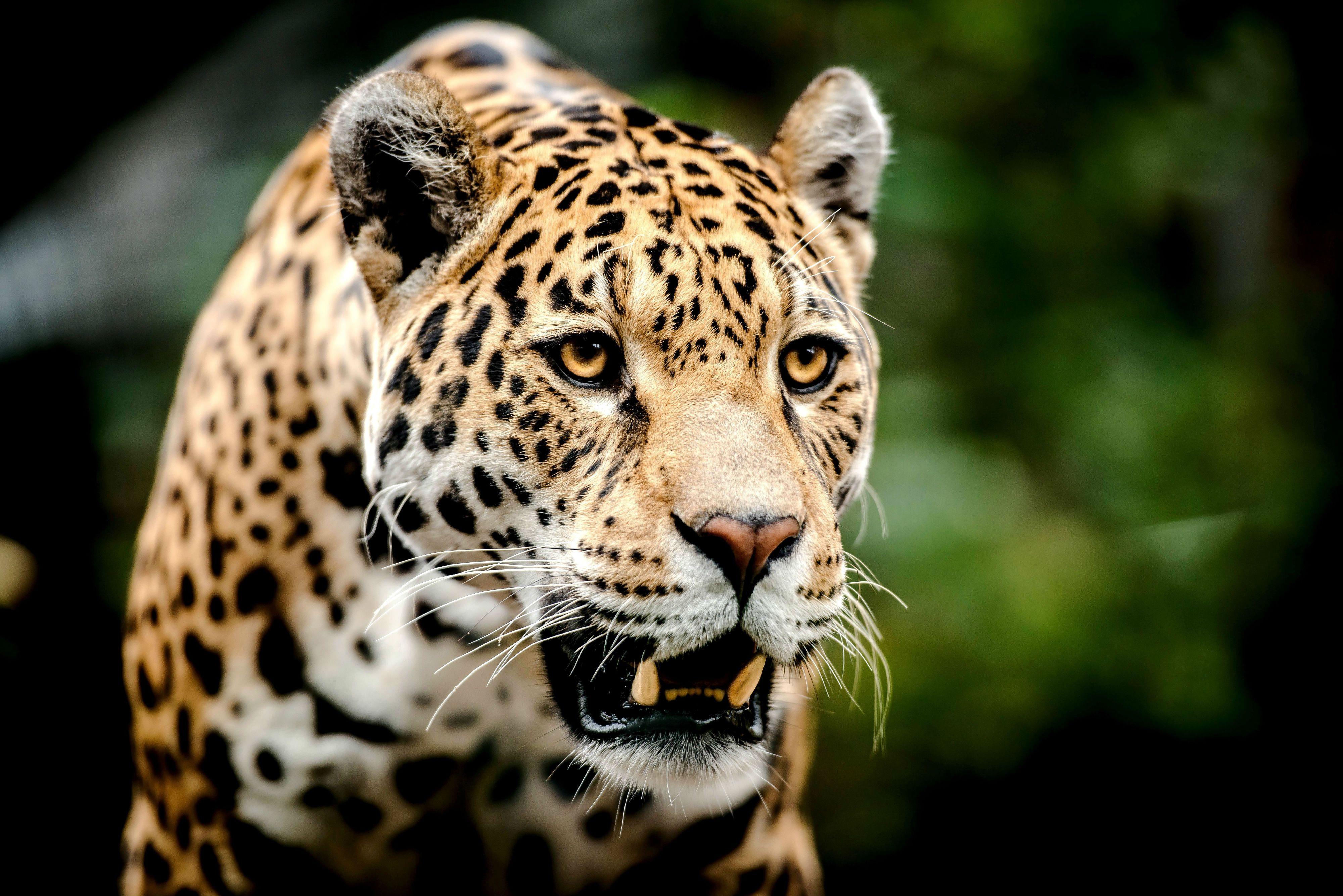 Картинки фотообои животные