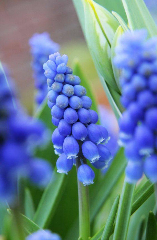 Welche Fruhlingsblumen Bluhen Wann Fruhling Blumen Fruhlingsblumen Bilder Fruhlingsblumen
