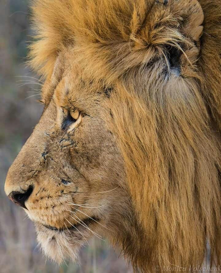 Krueger National Park.....A King Faune
