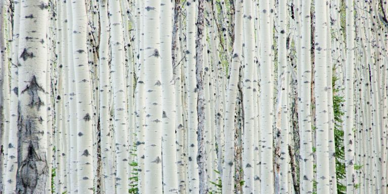"""""""It's stealing, plain and simple. And it's causing a lot of damage in the forest."""""""