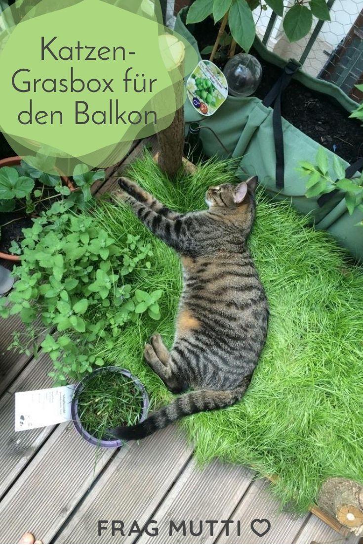 Katzen-Grasbox für den Balkon🐱