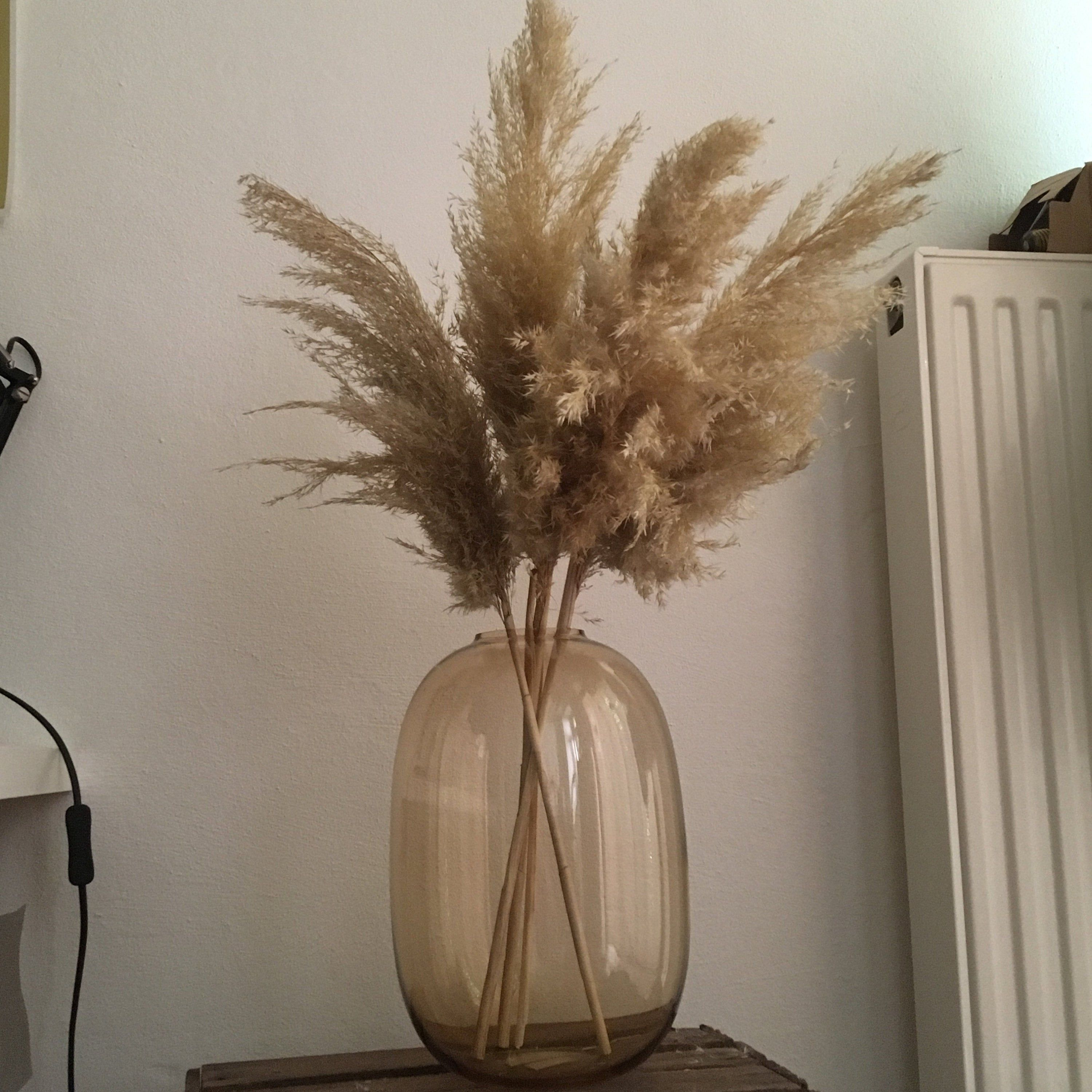 Pampas Grass Extra Dried Reeds Ivory Cream Colored One1stem Etsy Dried Flowers Tall Vases Pampas Grass