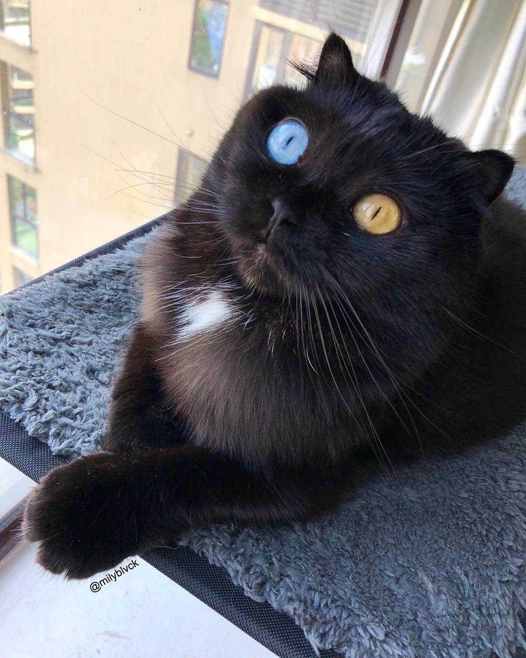 Human Embodiment Of Jazz Hands In 2020 Animal Stories Pet Kitten Black Cat