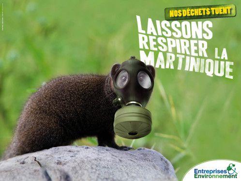 affiche-entreprises---environnement-Martinique-mangouste.jpg (498×374)