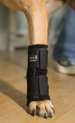 How To Heal A Cat S Leg Sprain