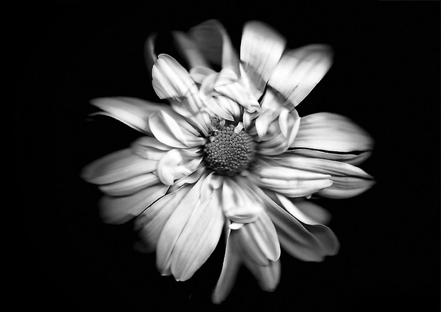 5 Tips for Photographing Flowers with Impact | Landscape ...