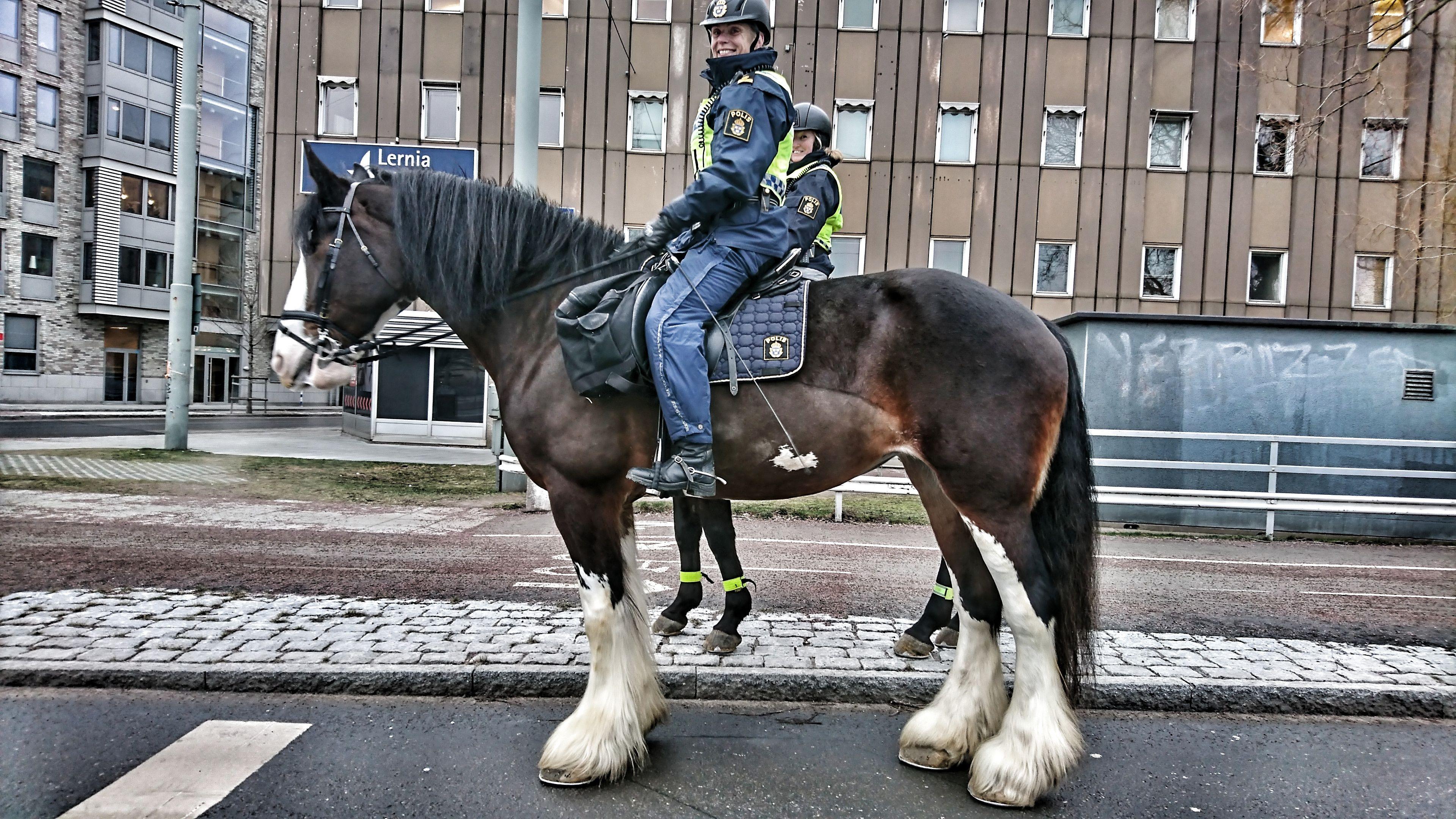 Amazing Swedish Police Horse Http Ift Tt 2k1d7dw Swedish Police Horses Police
