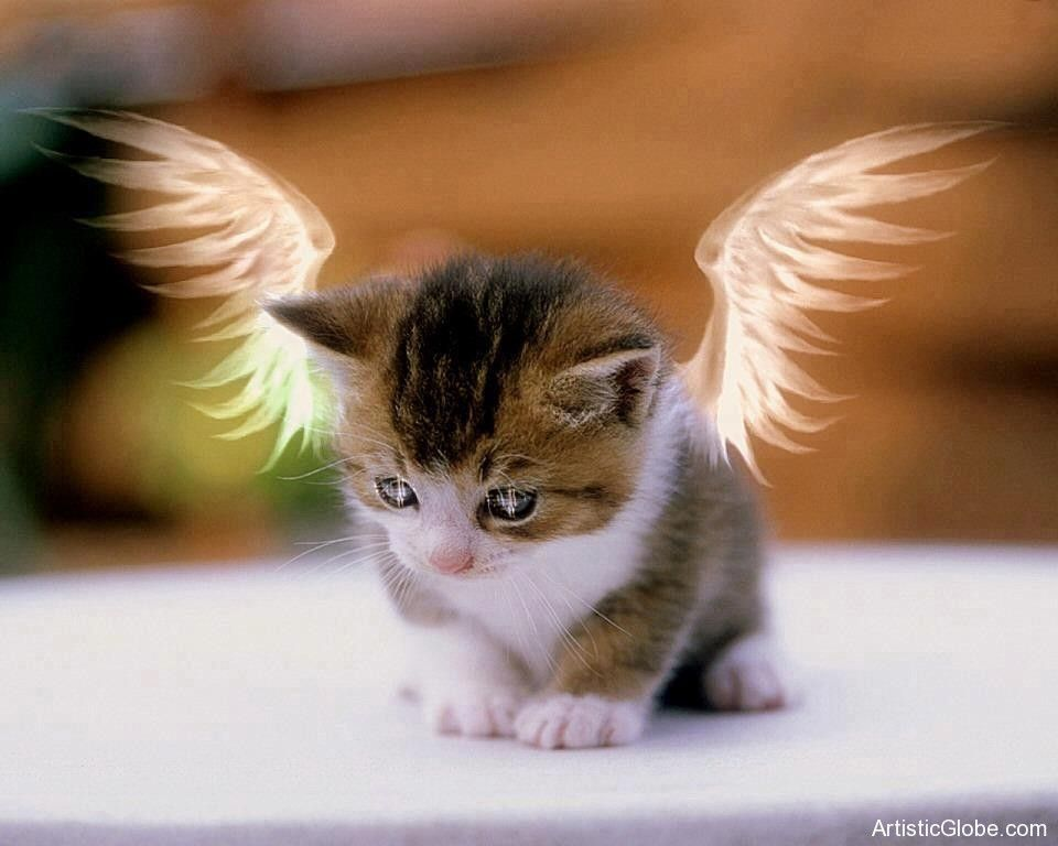 Cute Cats Kittens Cute Cat Angel Cutest Cat Wallpapers For