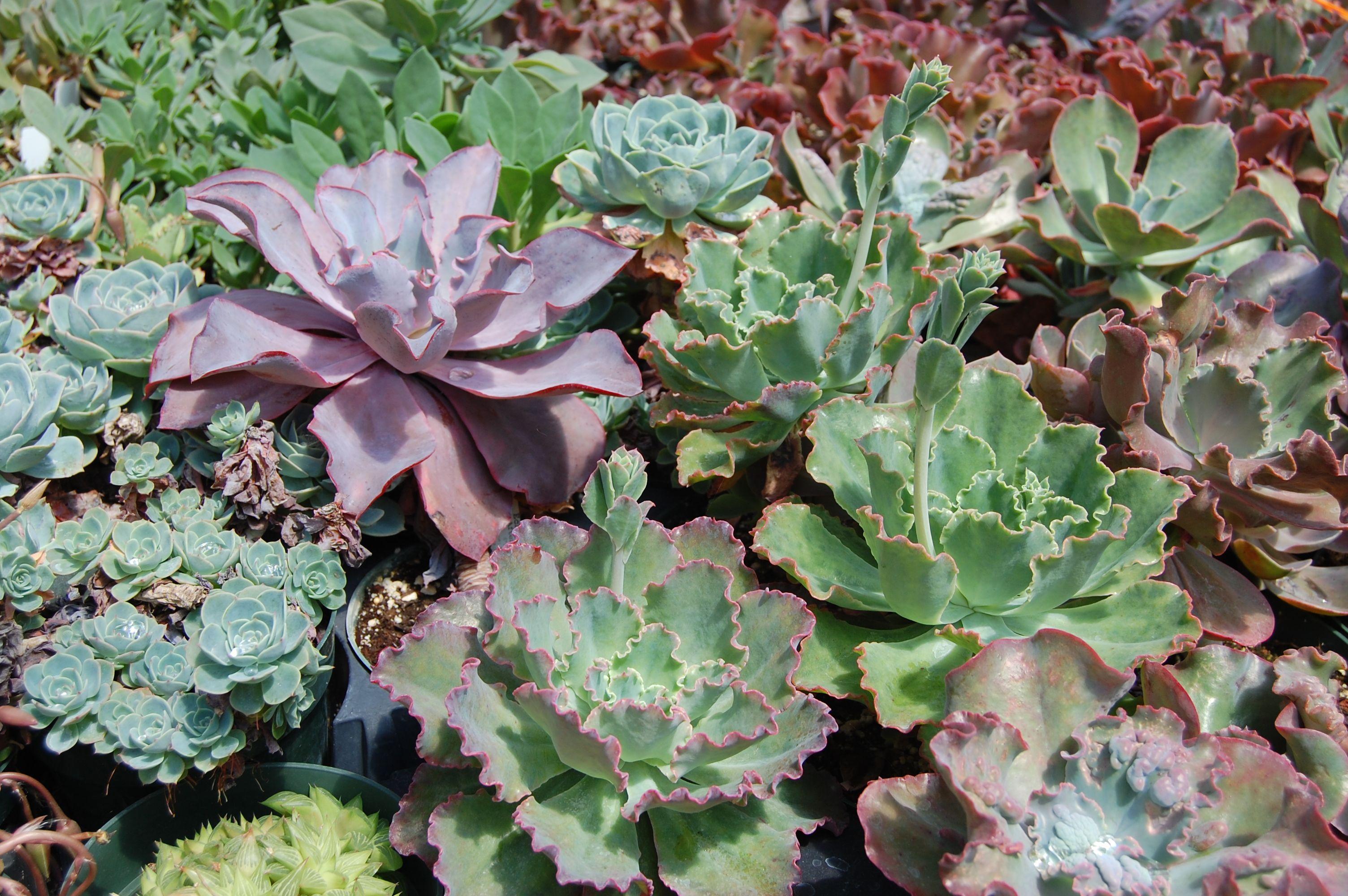 We Heart Succulent Gardens  Far Out Flora