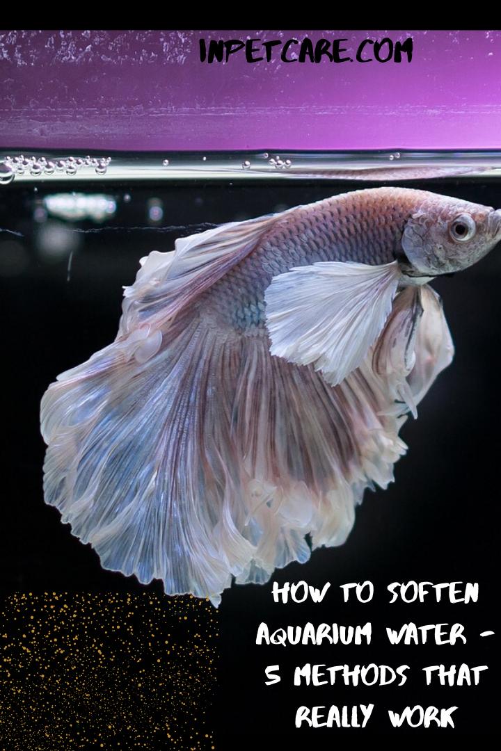 Pin On Aquarium Care Tips