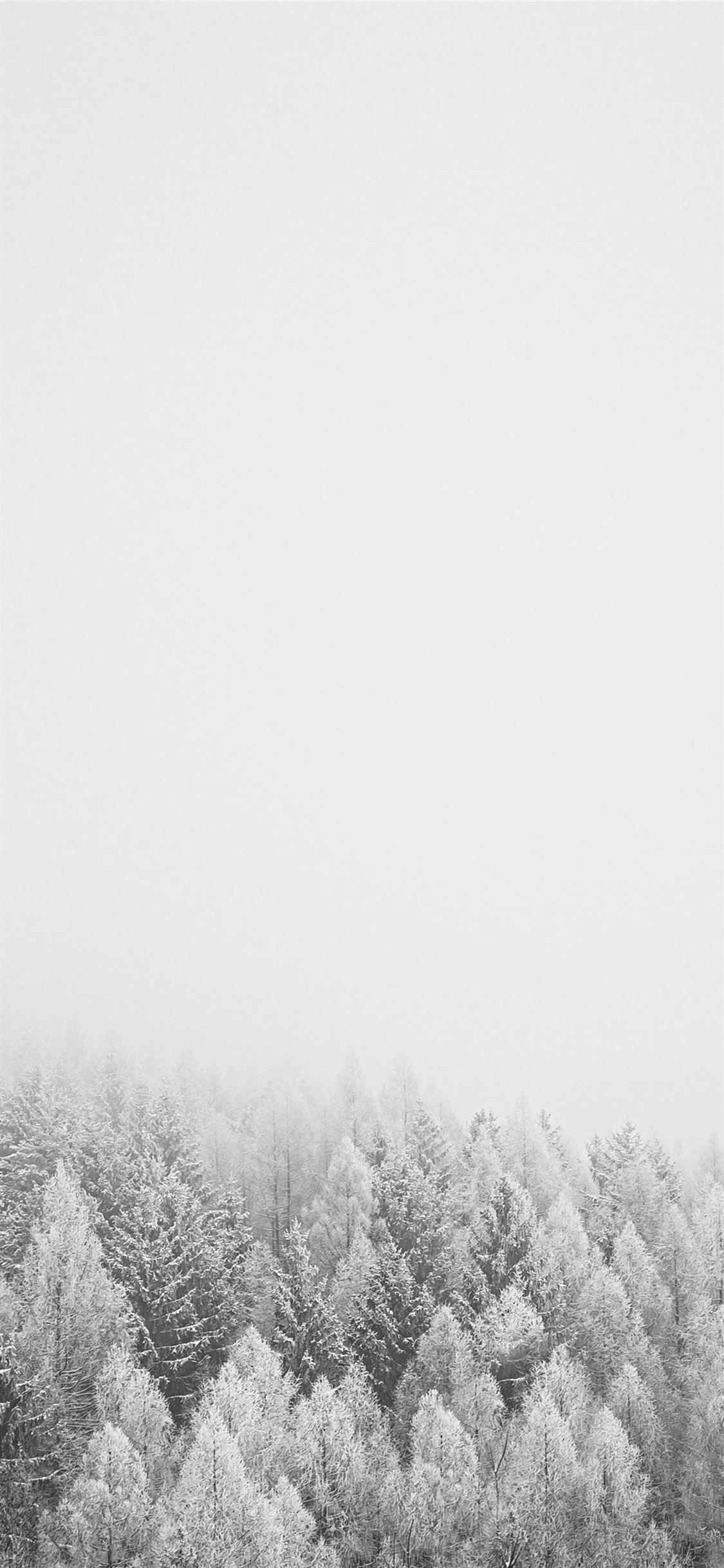 Snow Covered Trees During Daytime Grey Black And White Nature Tree Snow Iphone11w Snow Wallpaper Iphone Winter Wallpaper Black And White Wallpaper Iphone
