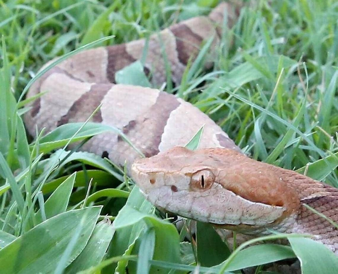 5 Ways To Keep Snakes Out Of Your House And Yard The Plant Guide Snake Keep Snakes Away Plant Guide