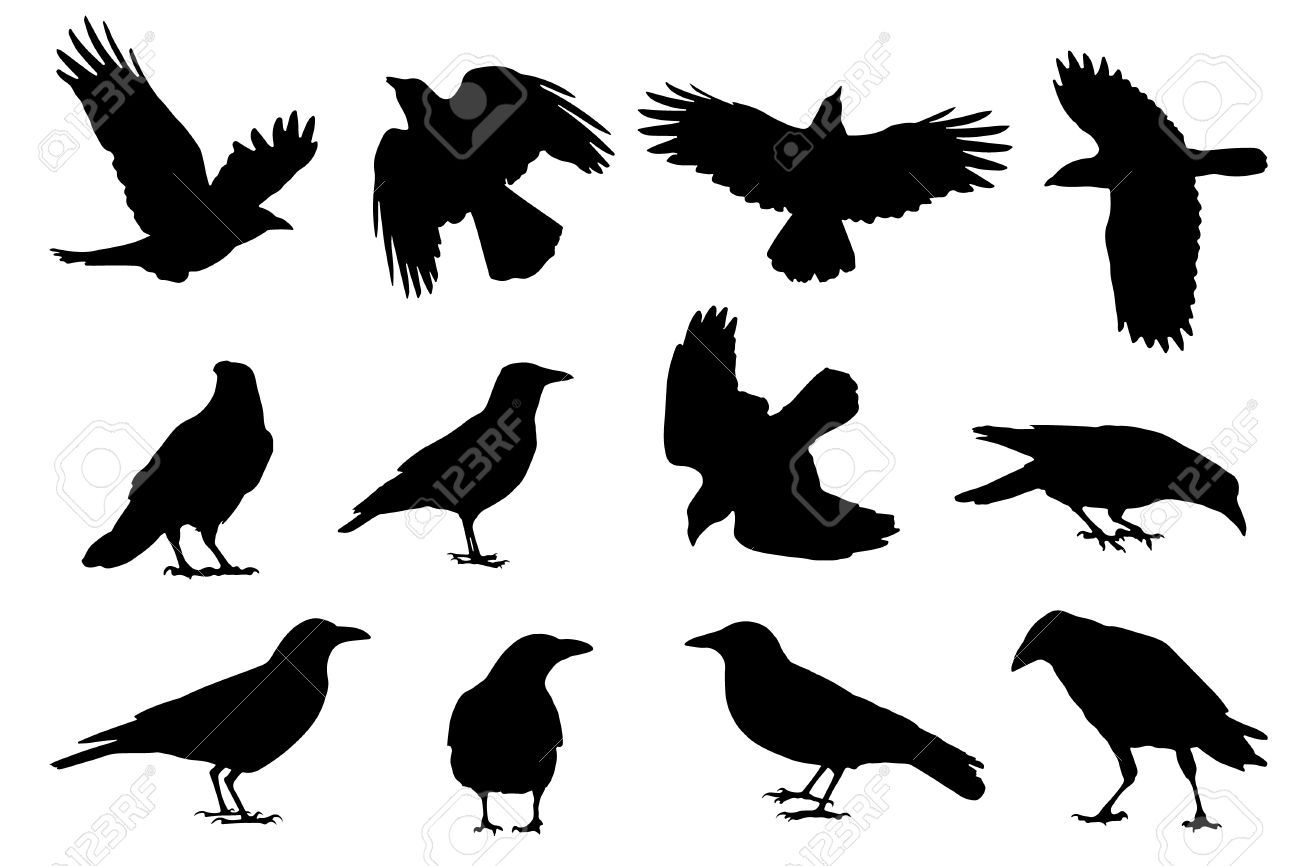 Crow Silhouettes On The White Background Crow Silhouette Crow Images Crow