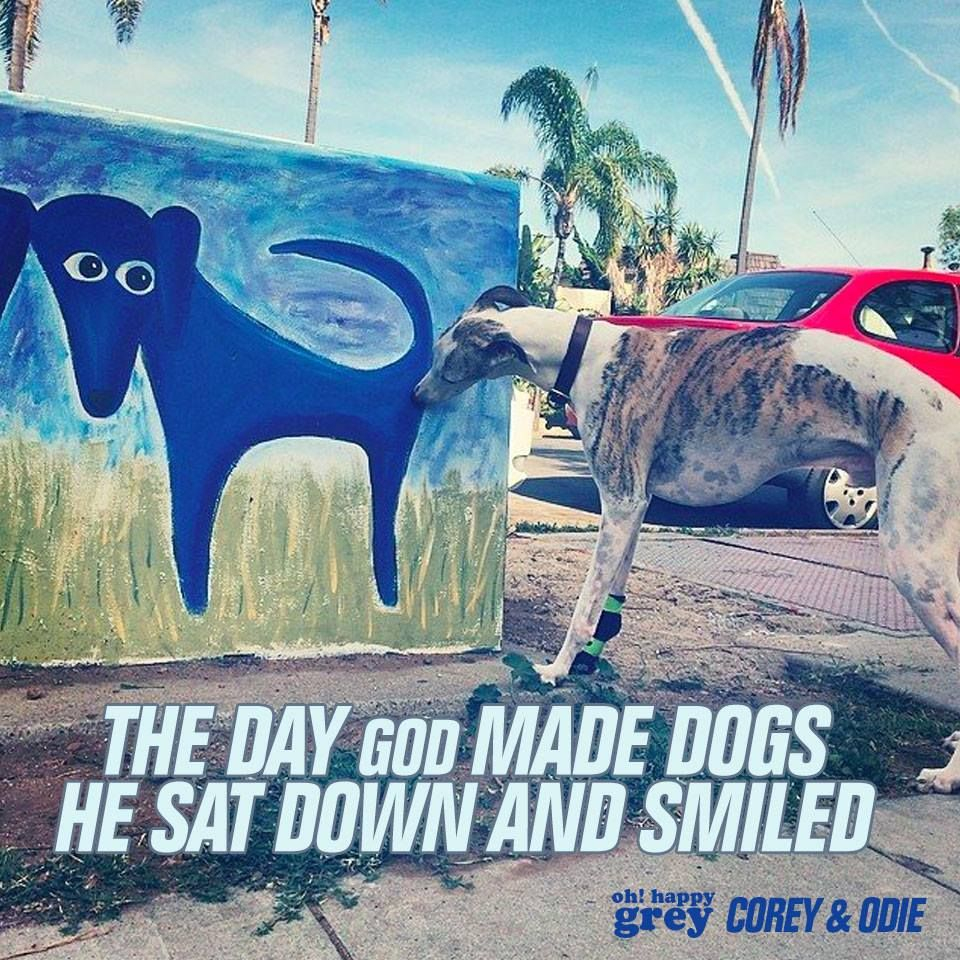 The day God made dogs, he sat down and smiled. Galgo. greyhound. adopt.