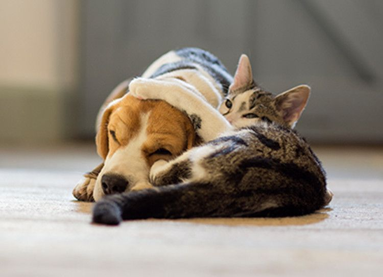 The Best Pet Advice We Learned On Reddit Purewow Dog Cat Cat Person Friendly Dog Breeds