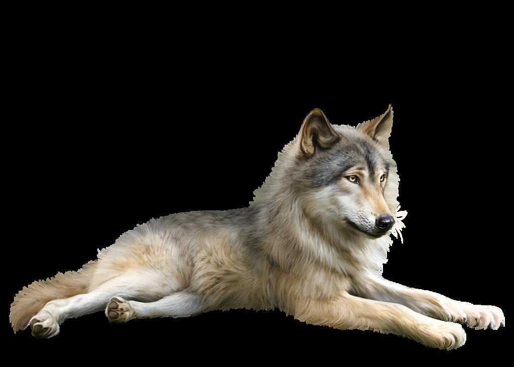 Tube Loup Animaux Belles Images Animées Et Image Joyeuse