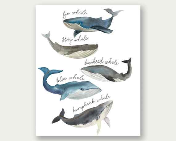 Whale Print Whale Species Watercolor Whales Whale Printable