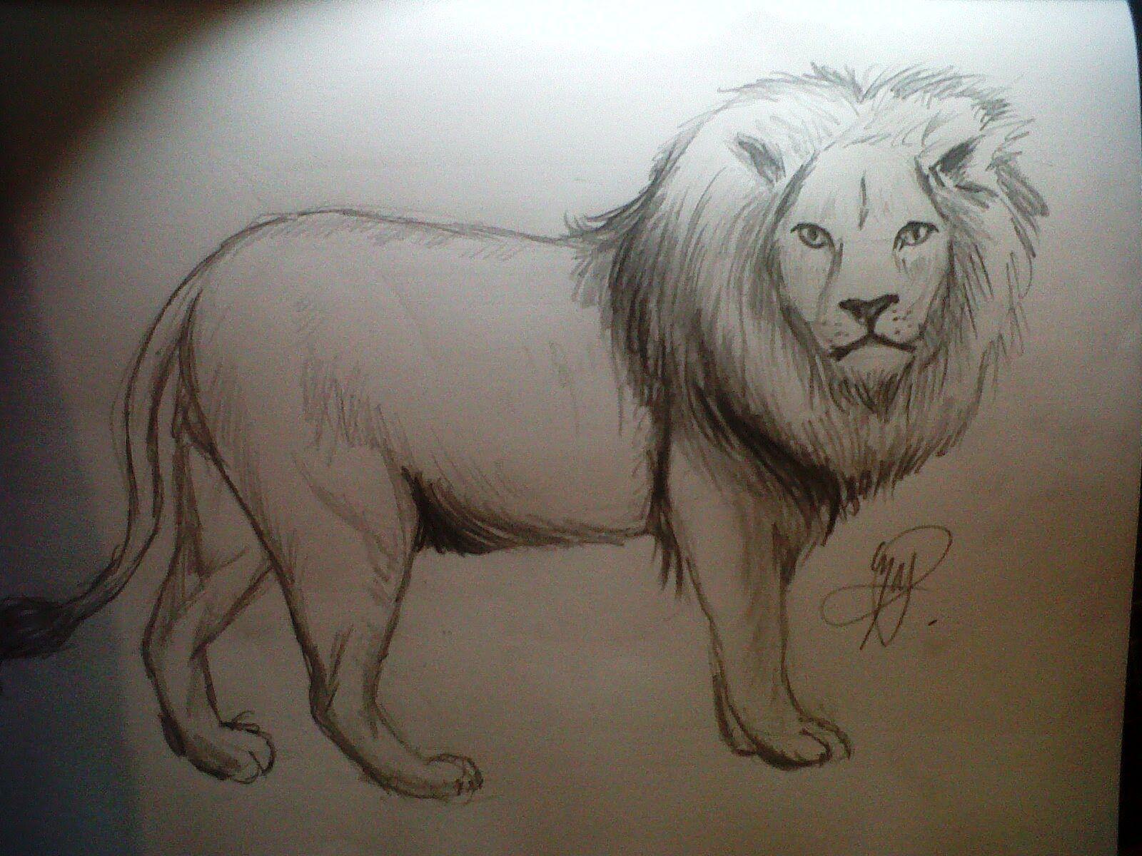 Dibujando Un Leon Realista Paso A Paso Como Dibujar Animales Como Dibujar Un Caballo Dibujos De Animales