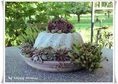Heute Möchte Ich Euch Einen Einblick In Meine Hauswurz  Und Beton Gugelhupf  Sammlungen Geben ;o) Ich Mag Diese Anspruchslose Pflanze Sehr.