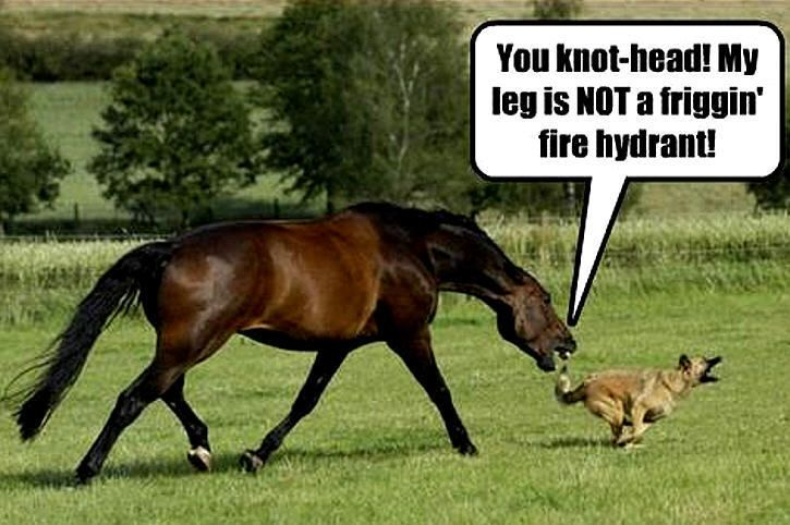 horses funny google search horse quotes pinterest