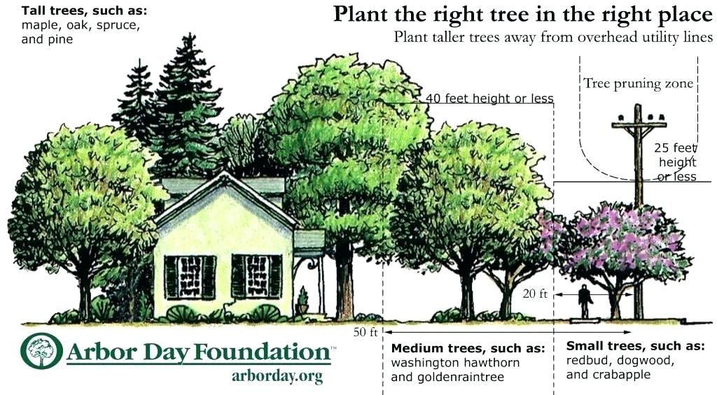 Front Yard Trees Front Yard Tree Placement Tree Planing Arbor Day