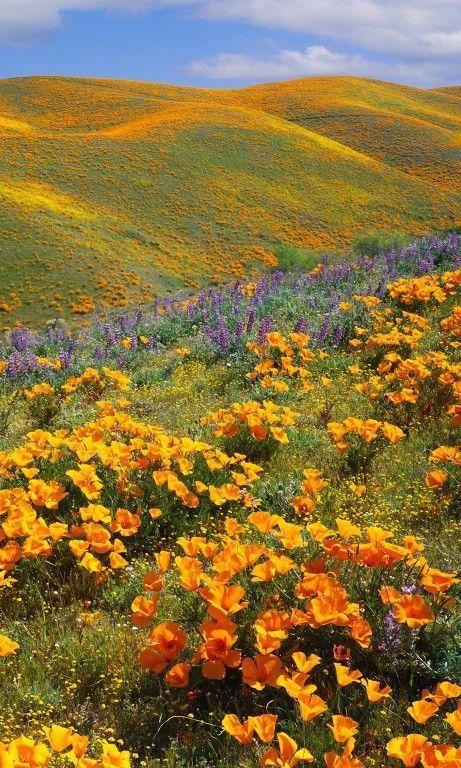 15 Beautiful Photos of Spring Flowers Around the World
