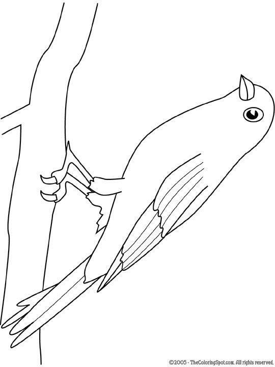 Kleurplaten Van Kleine Vogels.Kleurplaten Van Kleine Vogels Nvnpr