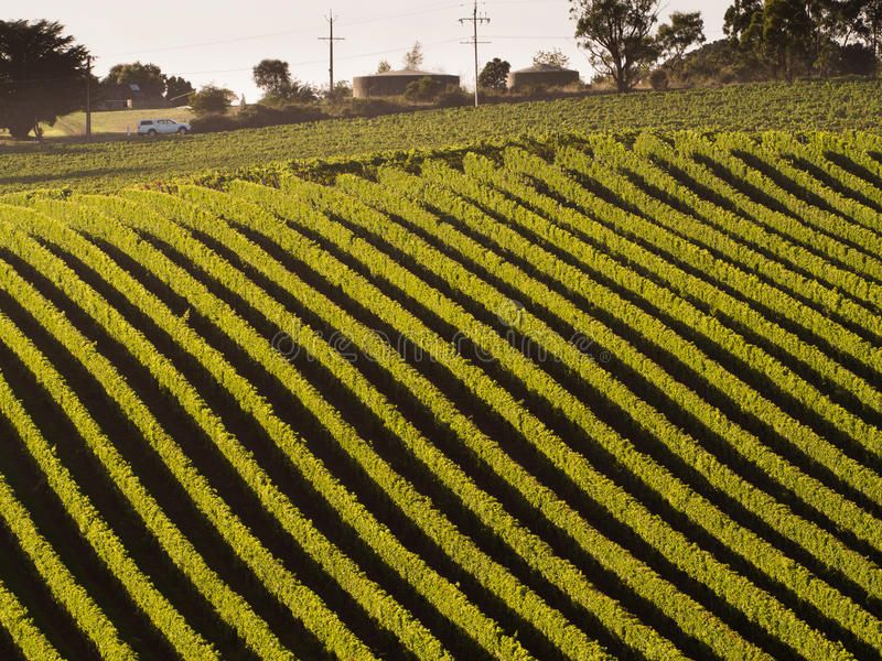 Vineyard In Adelaide Hills Car Passing By A Vineyard In Adelaide Hills Affiliate Adelaide Vineyard Hills Passing Car In 2020 Vineyard Photo Stock Photos
