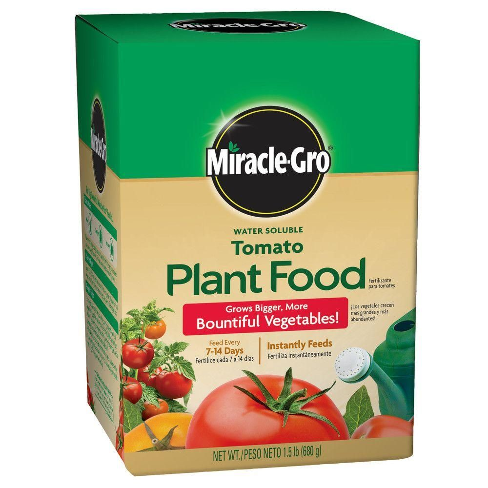 Miracle-Gro Water Soluble Tomato Plant Food instantly feeds to grow bigger, more bountiful tomatoes and vegetables compared to unfed plants. Use our plant food with the Miracle-Gro Garden Feeder or any watering can, and feed every 1-2 weeks. Safe for all plants when used as directed. Miracle-Gro Water Soluble Tomato Plant Food will help you get better results.