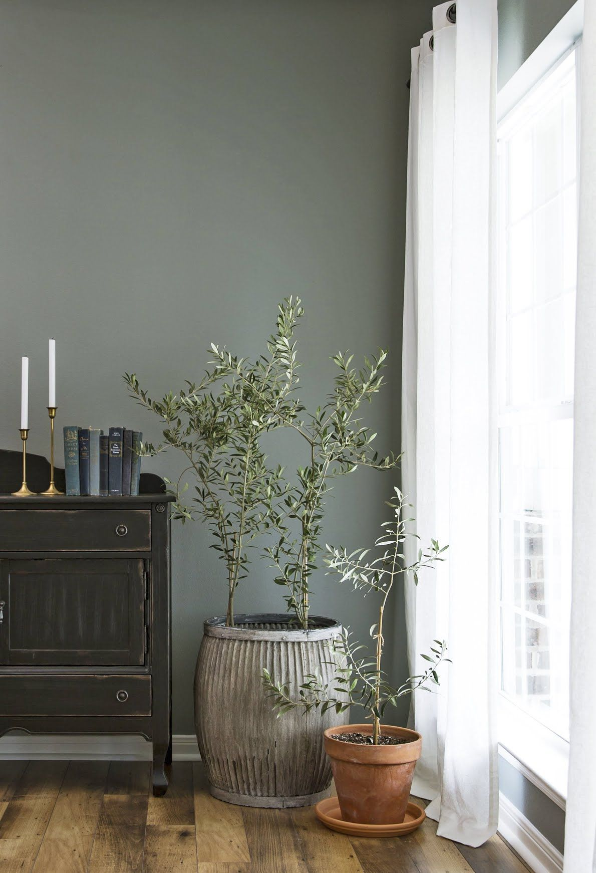 The 1 Houseplant Joanna Gaines Can T Get Enough Of Natural Home Decor Potted Olive Tree Decor