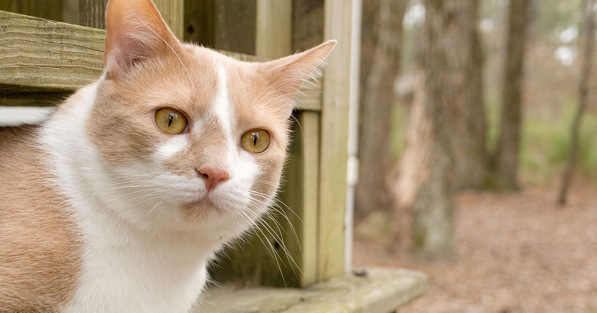 Answers Cats in a Bind over Phosphorus (With images