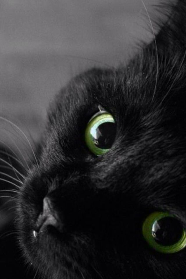 Beautiful Green Eyes I Want A Black Cat So Badly Not Even A Centimetre Of White Just Pure Darkest Pitch Black Beautiful Cats Crazy Cats Black Cat