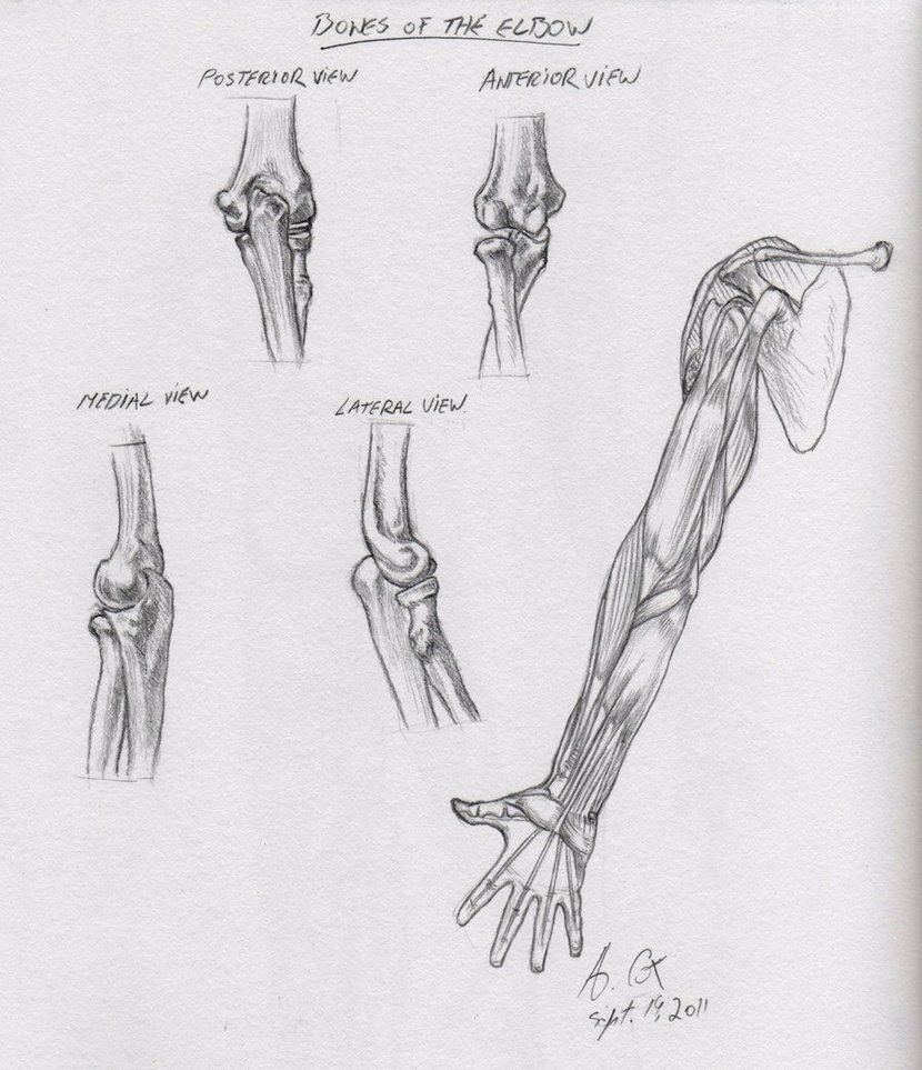 Pin by Victor Silva on Anatomy | Pinterest | Anatomy, deviantART and ...