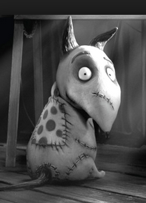 Great Pic Of Frankenweenie To Draw Tim Burton Films Tim Burton Tim Burton Movie