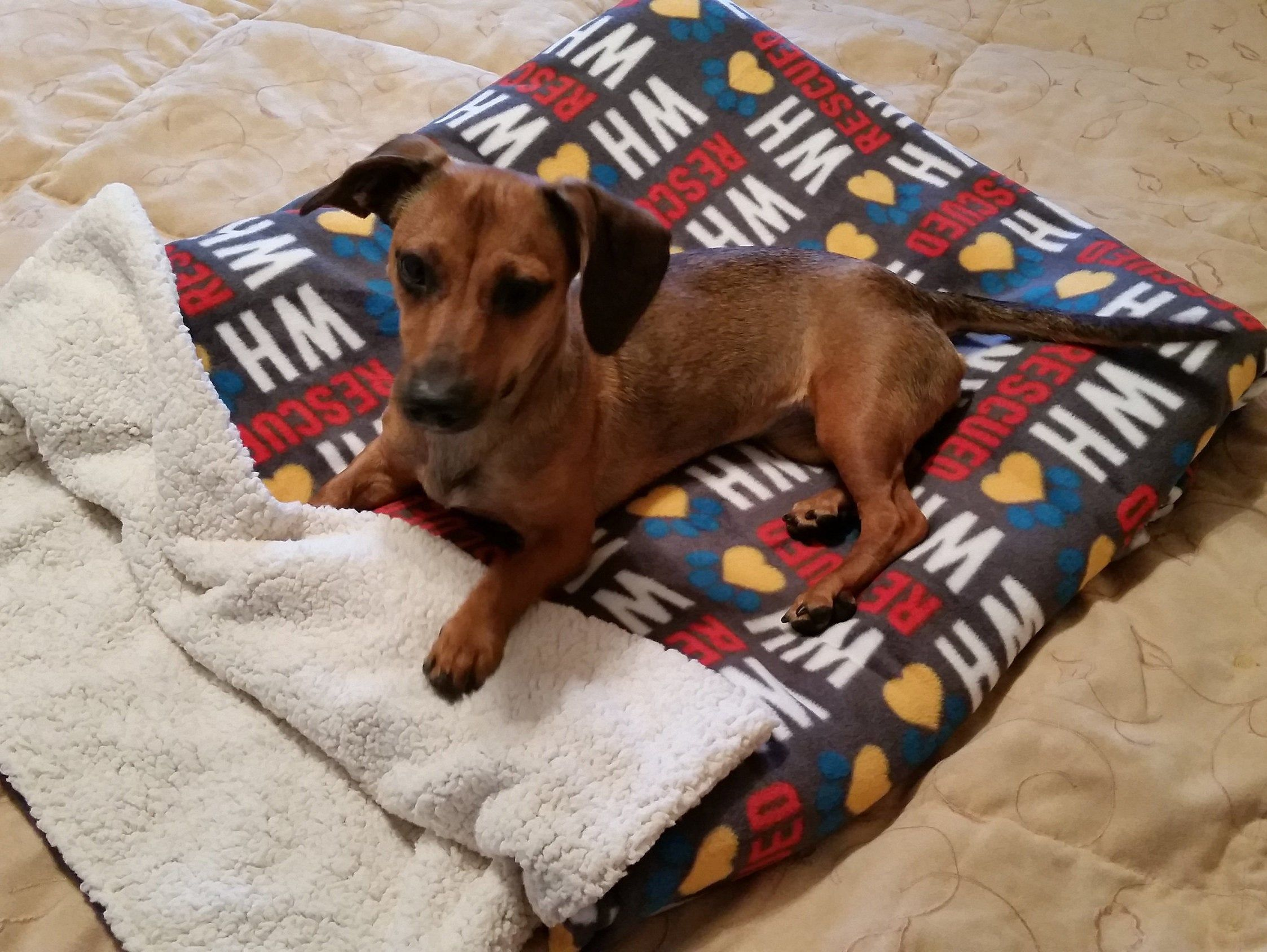 Dog Rescue Blanket, Dog Snuggle Sack, Dog Burrow Bag, Dog