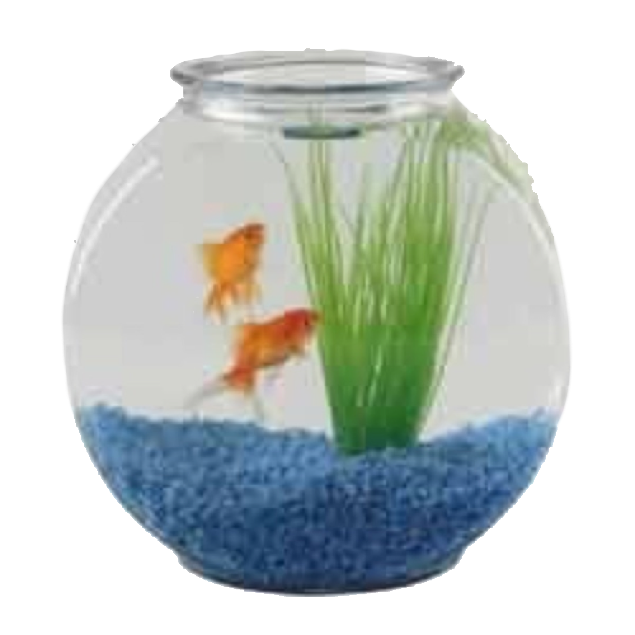 Pin By Lily On Filler Png Goldfish Cool Fish Tanks Fish Bowl