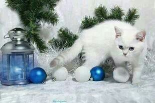 Minina en rl árbol de Navidad