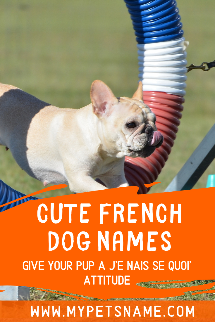 France Is Famous For Fashion Food And Beautiful Cities All Of Which Can Be Inspiration For Naming Your New Dog Che Dog Names Cute Pet Names French Dog Names