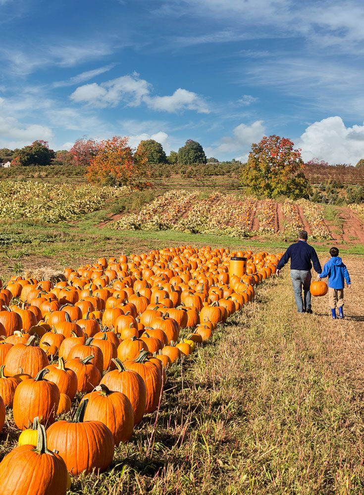 13 great places to go pumpkin picking this Halloween