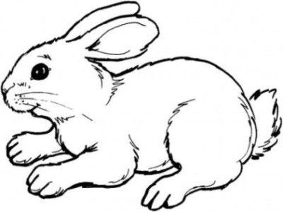 ausmalbilder kaninchen 02 | Háziállatok | Pinterest | Kaninchen ...