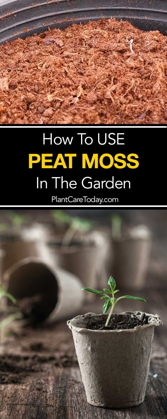 Using Peat Moss Do Use Peat In Your Growing? Garden